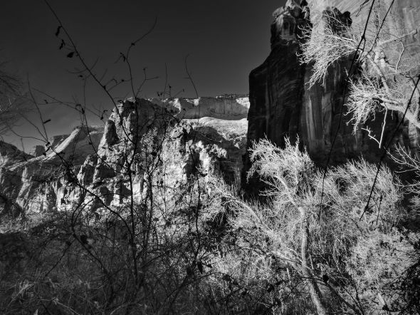 Bright sunlight shines on the bare branches of trees which contrast the dark shadows cast upon the rock formations of Zion National Park in Springdale, UT.